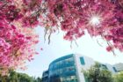 California State University – CSU Campus